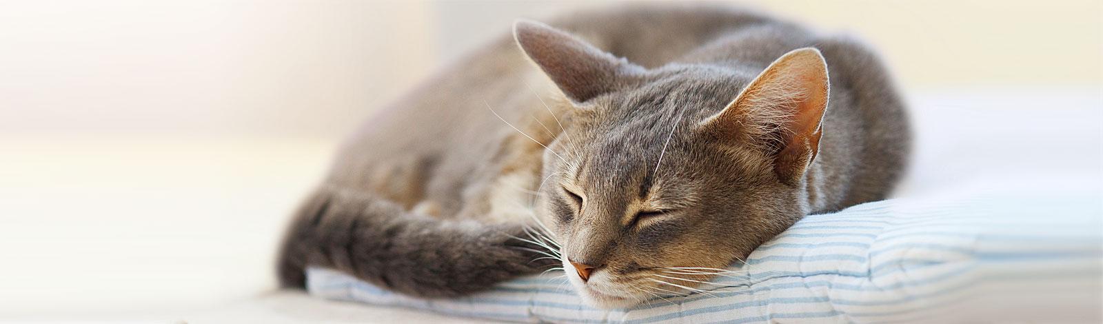 Rugiger schlafen
